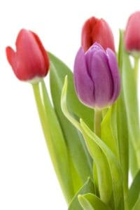 Spring is the time to review your Denver air filtration system.