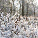 winter-snow-field
