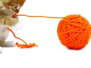 5 tips to keep your cat from chewing on cords applewood fixit. Black Bedroom Furniture Sets. Home Design Ideas