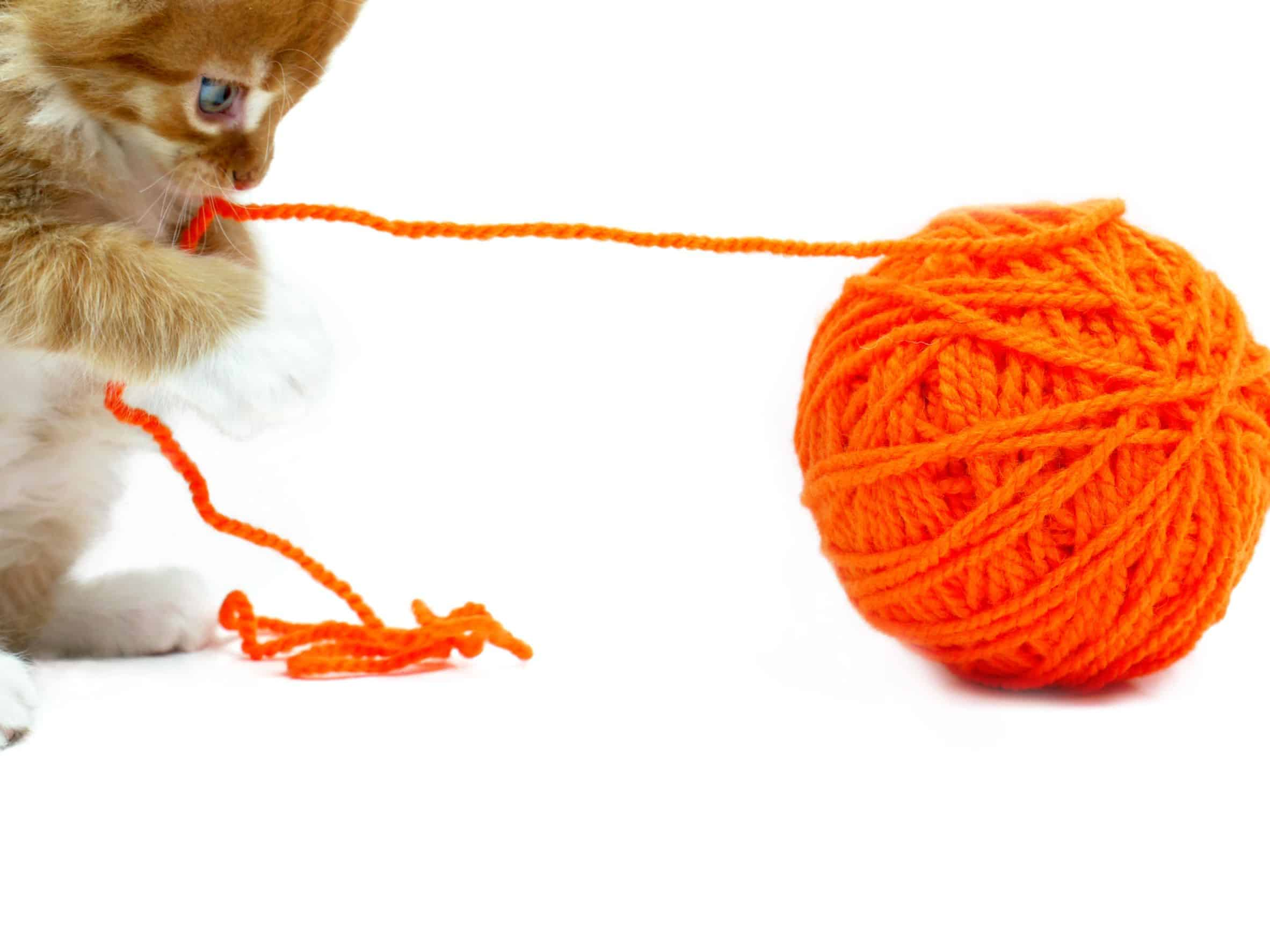 5 tips to keep your cat from chewing on cords | Applewood