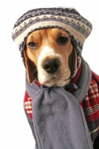 cold-dog-applewood