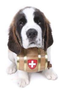 saint-bernard-puppy-applewood